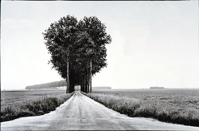 winding road lined with a single row of trees on either side, with flat farm fields on both sides