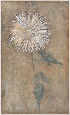 white flower against brown background