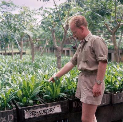 "Color photograph of a man with a pipe in his mouth standing next to plants in pallets with a sign that says ""Pre-Nursery"""