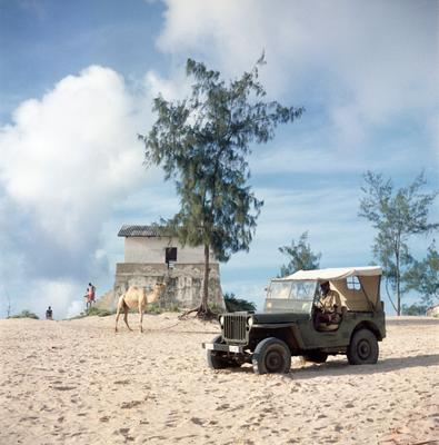 Color photograph of a Jeep and a camel standing in front of a building and sparse trees