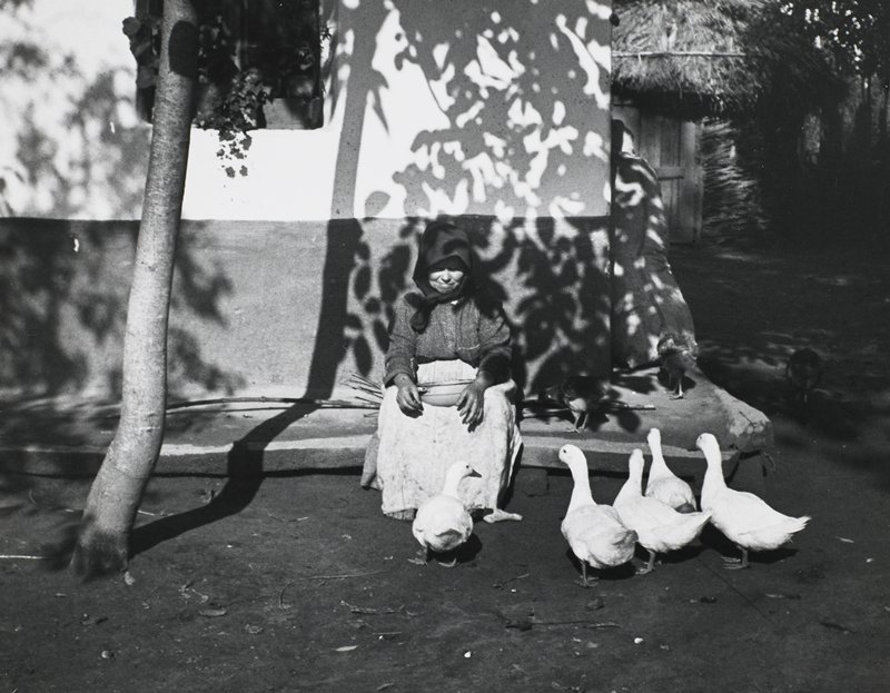 seated woman wearing a headscarf, long skirt and long apron, holding a bowl on her lap, feeding five white ducks