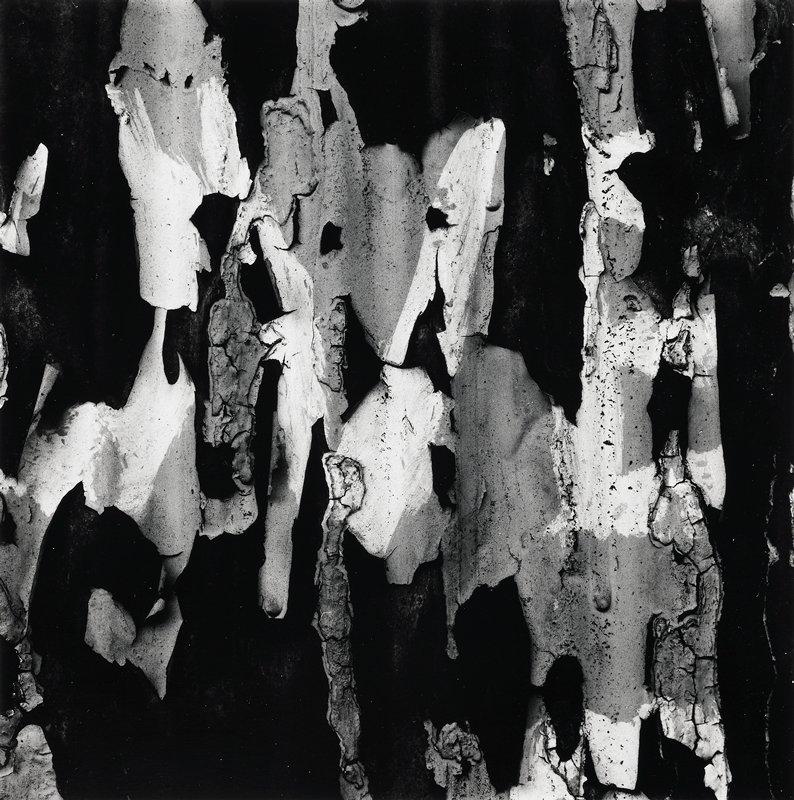 abstract image - paint or tree bark?; irregular shapes in three tones - black, medium grey, white