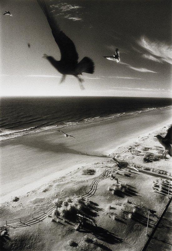 birds over seashore; center bird is in silhouette