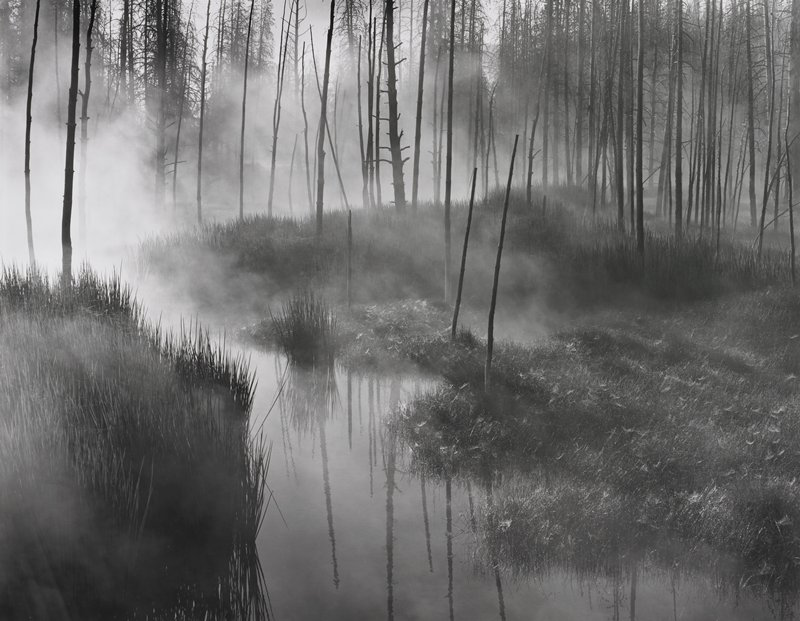dead trees along a stream with rising steam; grasses left foreground, right side and center back