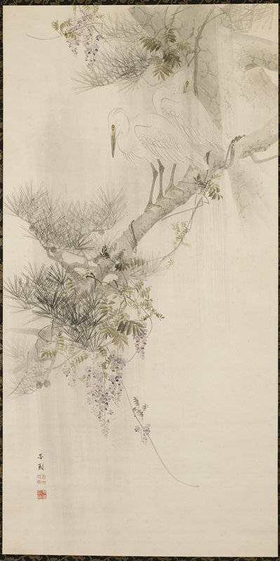 two white birds at top perched on thick pine branch; purple flowering wisteria vines wrapped around branches