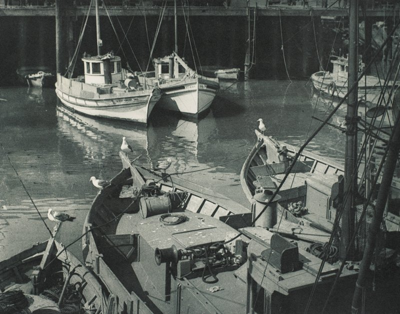 parts of eight fishing boats visible; five birds on rails of three foreground boats; boats are at anchor
