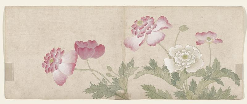 leaf from a small album of flower paintings; five blooms (four red and one white) with leaves and buds