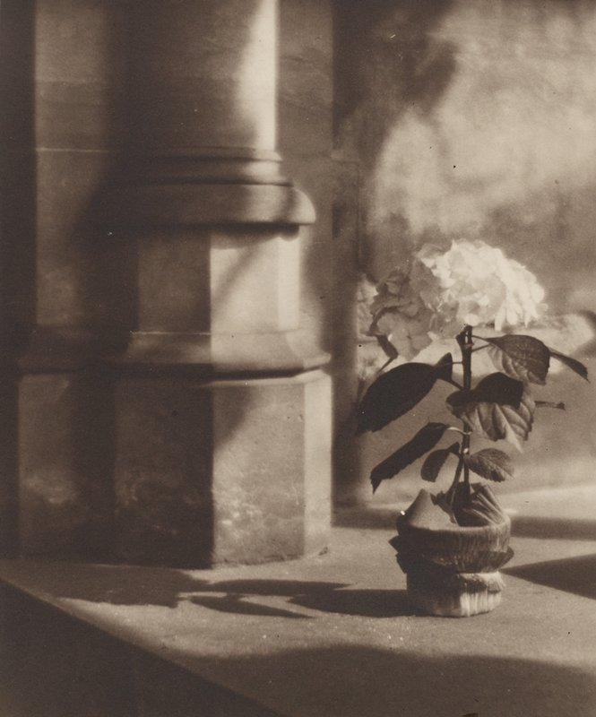 sepia-toned; hydrangea stem with large bloom in a small pot resting on a ledge at right; column base at left