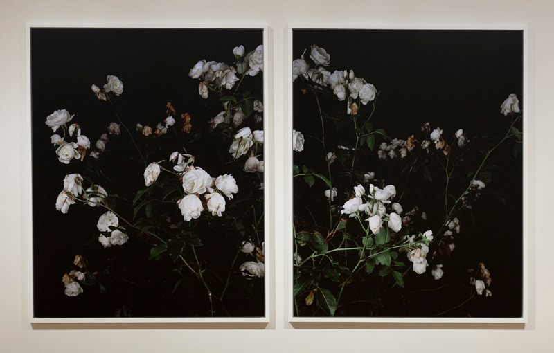[MP-JONES-00410] a: (II) a photograph of wilted white roses on a black background; stems go from LR corner diagonally upward to UL corner [MP-JONES-00415] b: (III) a photograph of wilted white roses on a black background; stems go from LL corner diagonally upward to UR corner