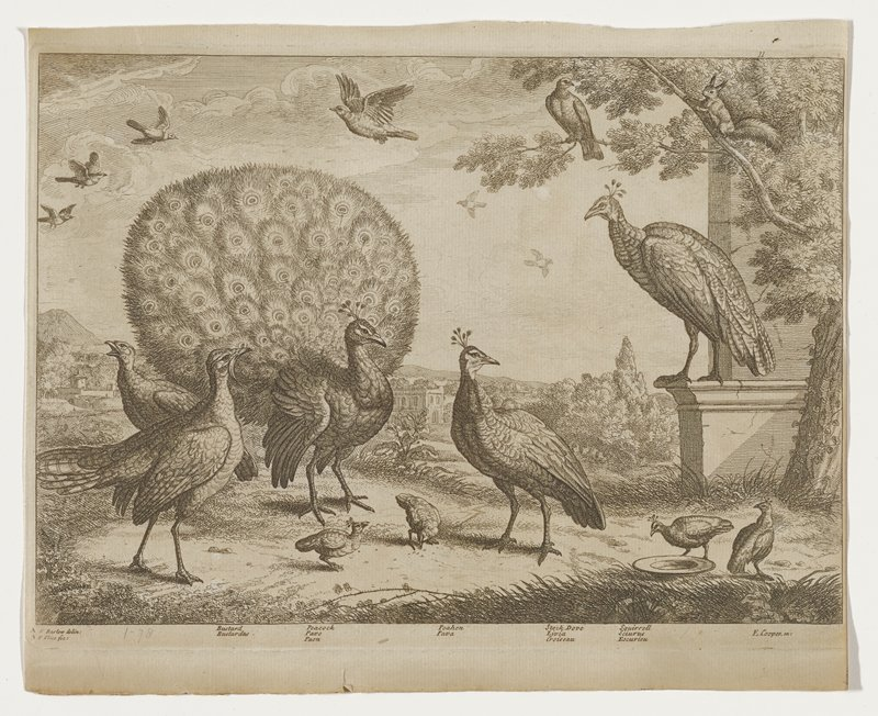14 birds and a squirrel; varieties identified include buzzard, peacock with tail displayed; peahen and doves