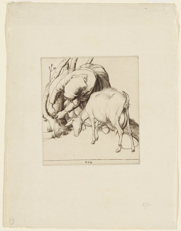 front view of woman leaning over to tie goat to trunk of tree; face turned downward from view; goat grazing behind woman at PL side