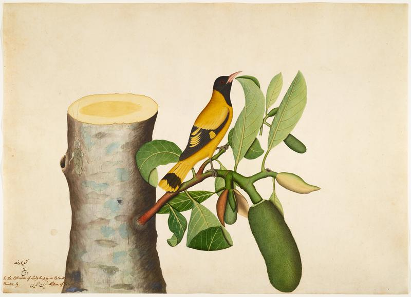 image of a yellow and black bird with red eyes perched on a branch attached to a stump with a bug on it; wood frame with gold face
