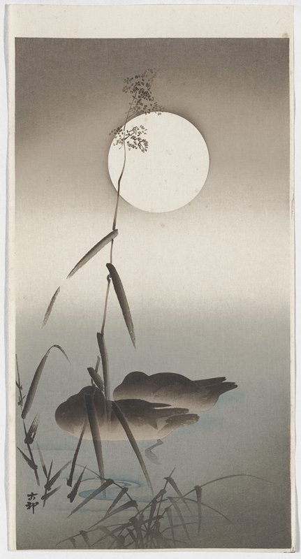 two dark grey and black ducks on the water, with their heads under their wings; moon at top center; silhouettes of stem with tiny flowers and leaves; two black characters, LLC
