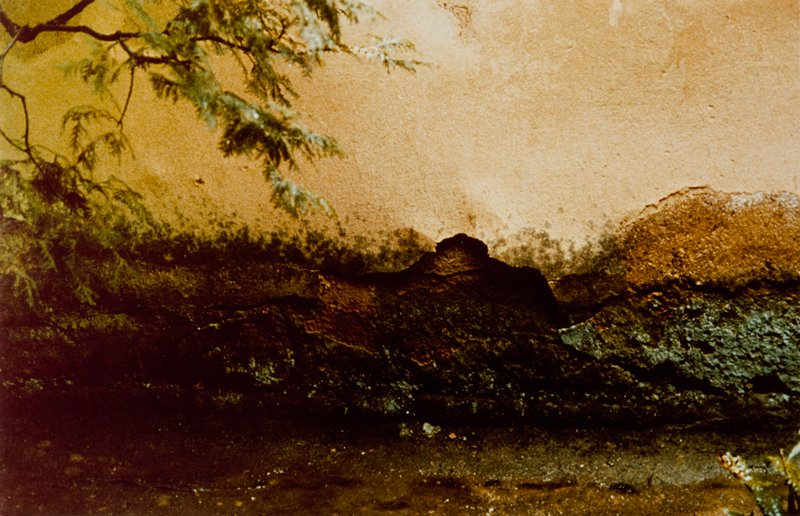 close-up of a crumbling plaster wall; line of moisture damage, moss, and losses along lower portion of wall; cedar branches at UL; small fern LR; damp foreground