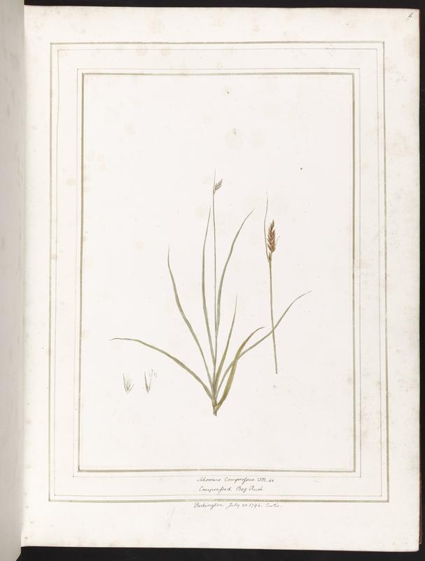 bound volume of botanical prints; brown leather cover with embossed with crest in center and embellished edges; series of botanical renderings of various plants and grasses on pages, with hand-written descriptions at bottom, and simple white backgrounds