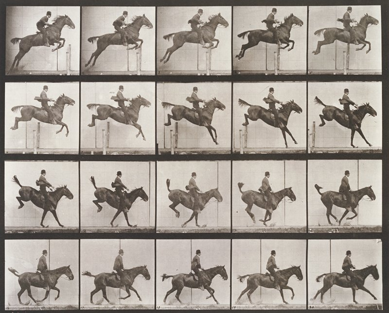 Jumping a hurdle, saddle, clearing, landing, and recovering, bay horse. From a portfolio of 83 collotypes, 1887, by Edweard Muybridge; part of 781 plates published under the auspices of the University of Pennsylvania