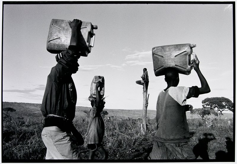 three people walking with gas cans on their heads; a boy is sitting in a dead tree in the background