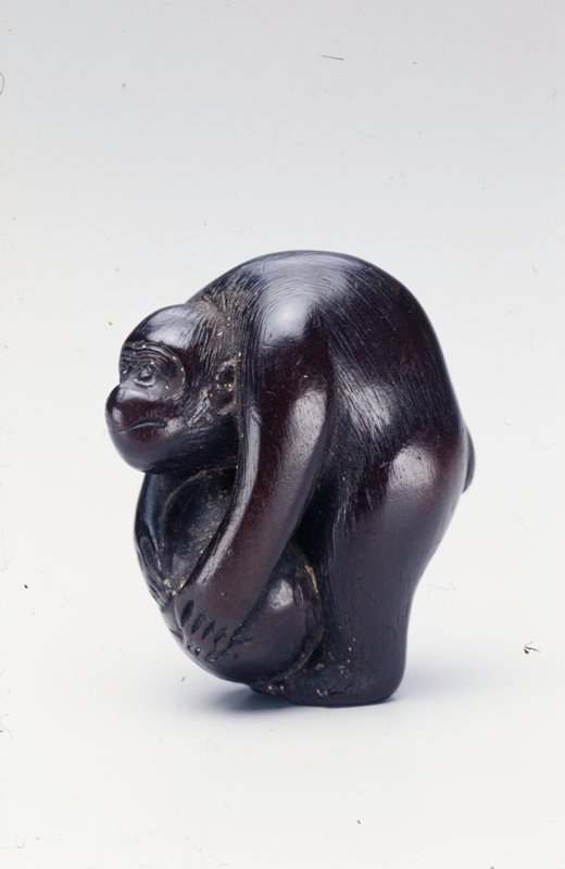 monkey bending over to hold a large nut on its feet