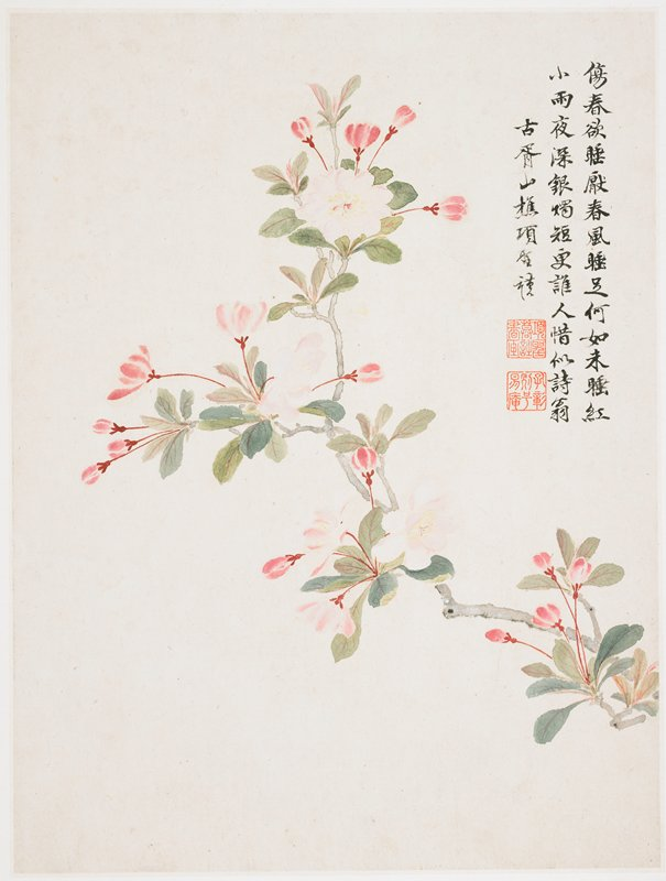 pink blossoms on dark pink stems, with clusters attached to grey branch; inscription and 2 seals at right