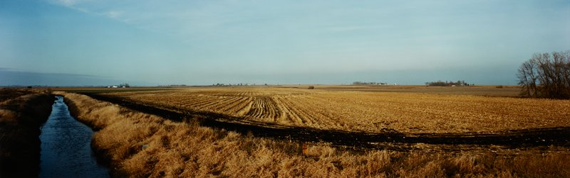ditch with water at left; yellow field at center; cluster of bare trees at right