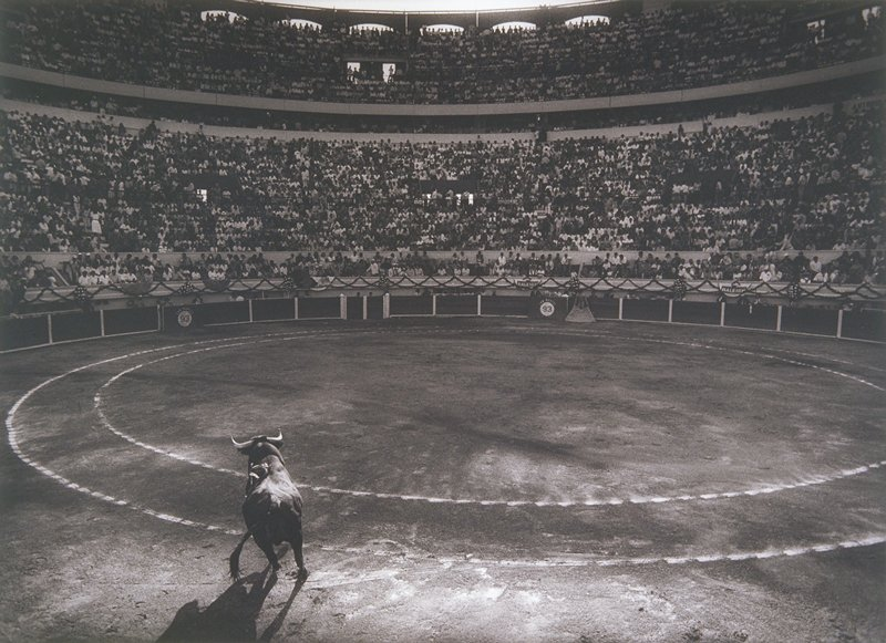 bull fight; bull inside of an empty ring facing a crowd-filled stadium