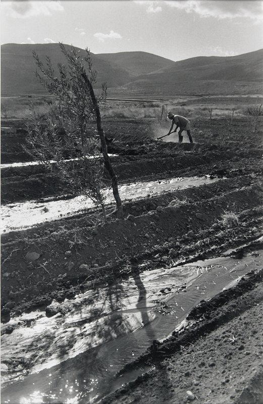 Irrigation channels in a field with a man hoeing in the background