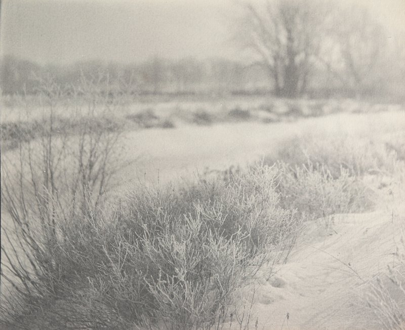 bushes and grasses in foreground with snow; bare trees in background