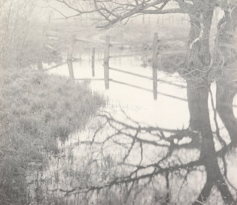 bare tree and partially immersed fence reflected in a very large water puddle