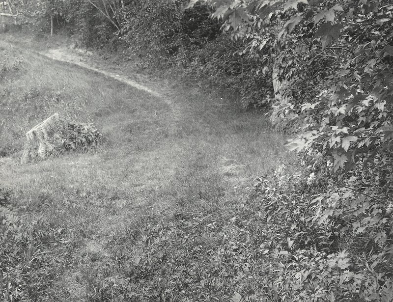 foliage at R, hugging bending path; tree stump at L