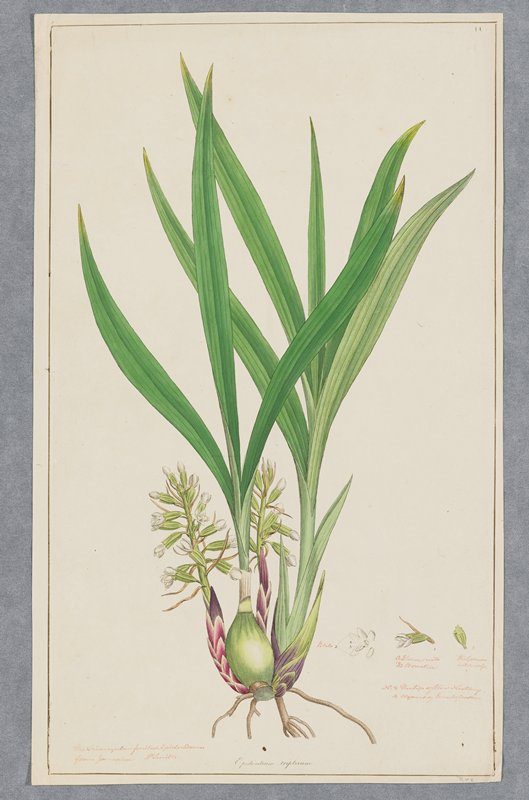 Plate 14, one of 18 hand-colored engravings of flowering plants by Sowerby