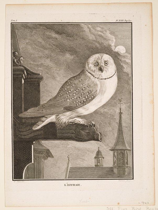 plate XXVI; page 370; black and white; birds (barn owl)