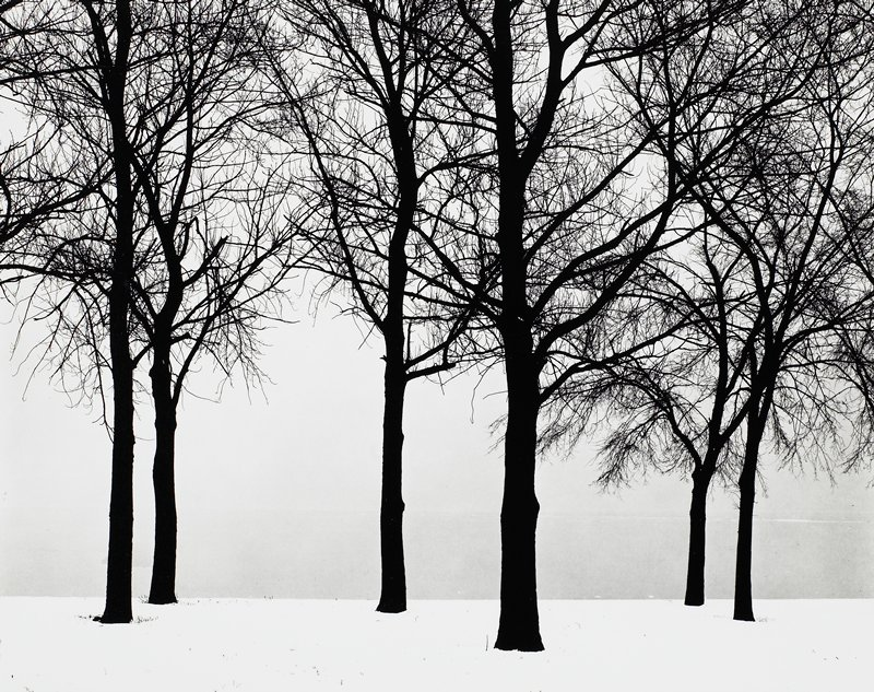 dark silhouettes of bare trees against a pale sky; snow-covered ground